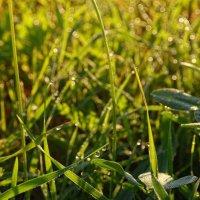 Свежесть молодой травы :: Татьяна Кретова