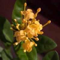 Тропический цветок :: Евгений Евдокимов
