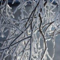Морозный день :: Дмитрий Арсеньев