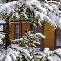 Вот и зима на пороге :: Olga F