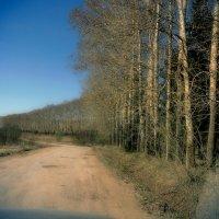 А вдоль дороги... тополя... :: Дмитрий