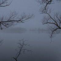 В туманной тишине :: Михаил (Skipper A.M.)