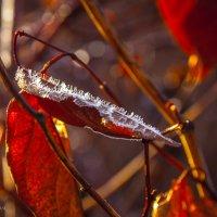 первые заморозки 01 :: Jurij Ginel