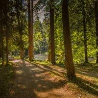 Волшебный лес :: Сергей Ягодин