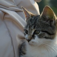 Little fury friend :: Алексей Гимпель
