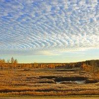 На болотах тишина... :: Miola