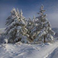 Нарядились свежим снегом. :: Виктор Гришенков