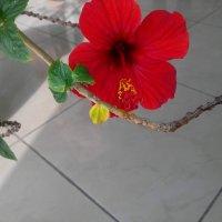 Цветок :: Лидия Гаранина