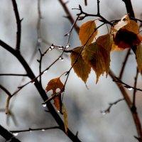 Ноябрь...  то снег, то  дожди.... :: Валерия  Полещикова