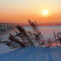 Морозное утро :: Елена ))