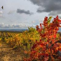 Крымские виноградники :: Владимир Колесников