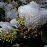 Замерзшая капля ... :: Владимир Икомацких