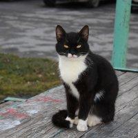 Кот ученный :: Евгений