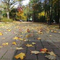 Осенний сквер :: Валентина Юшкова