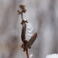 Кристаллы льда :: Andy Bayt