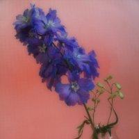 Цветок :: Владимир Орлов