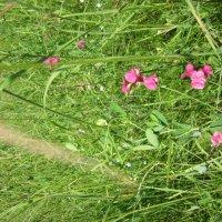 цветы :: вероника гениатуллина