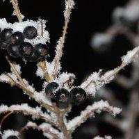 Примерка зимнего наряда.... :: Tatiana Markova