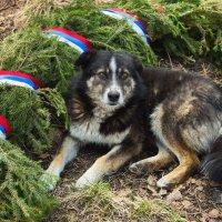 Бездомный пёс :: Валентин Кузьмин