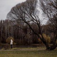 осень :: alexzonder