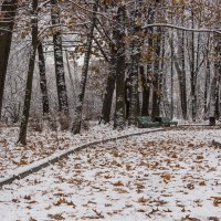 Первый снег :: Elena Ignatova