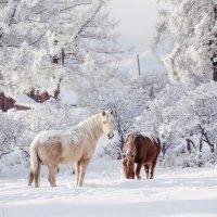 Морозным снежным утром... :: Алёна Бриц