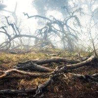 погорелый лес :: Солнечная Лисичка =Дашка Скугарева