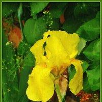 Рисую желтой краской :: Лидия (naum.lidiya)