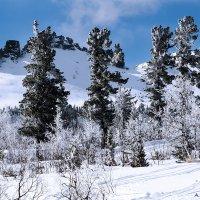 Великаны на фоне гор :: Александр Рейтер