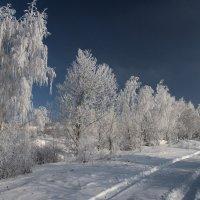 Белые красавицы выстроились в ряд.Оцените,люди,зимний их наряд... :: Александр Попов
