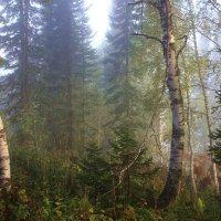 Туман рассеивается :: Сергей Чиняев
