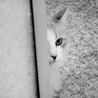 Кот в засаде :: Алина Ясмина (J.D.-Ray)