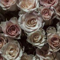 Розы :: Ханна Бессмертная