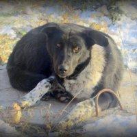 У собаки обед. :: Мила Бовкун