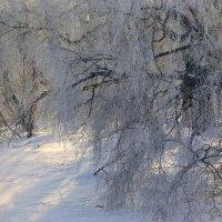 Зима! :: Павлова Татьяна Павлова