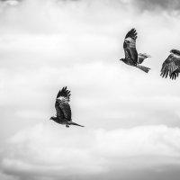 степные птицы :: Денис Иванов