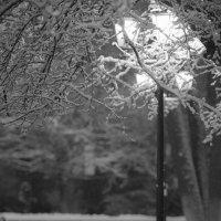 Первый снег :: Ольга Князева