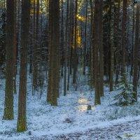 Луч света в зимнем лесу :: Valeriy Piterskiy