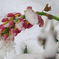 в снежном плену.. :: валя