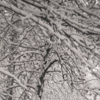 Снег :: Вера Арасланова
