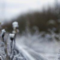 зимнее дыхание :: карина полякова