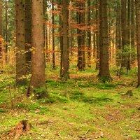 В осеннем лесу :: Waldemar .