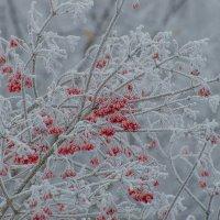 краски зимы :: Алексей -