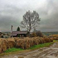 Дождливая осень 2015 года. :: Пётр Сесекин