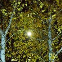 Теплый ноябрь :: БОРИС ЯКИНЦЕВ