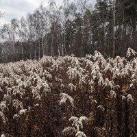 Ноябрь . . . :: Константин Фролов