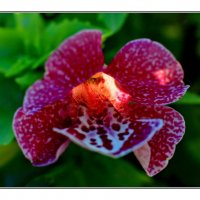 Цветок с подсветкой :: Nikolay Volkov