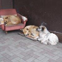 Уличные наблюдения: И у собак есть очередь на занятие руководящего кресла... :: Алекс Аро Аро