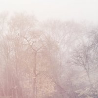 утро туманное :: Vladimir Zhavoronkov