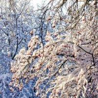 Цвета зимы :: Евгений Ярдов